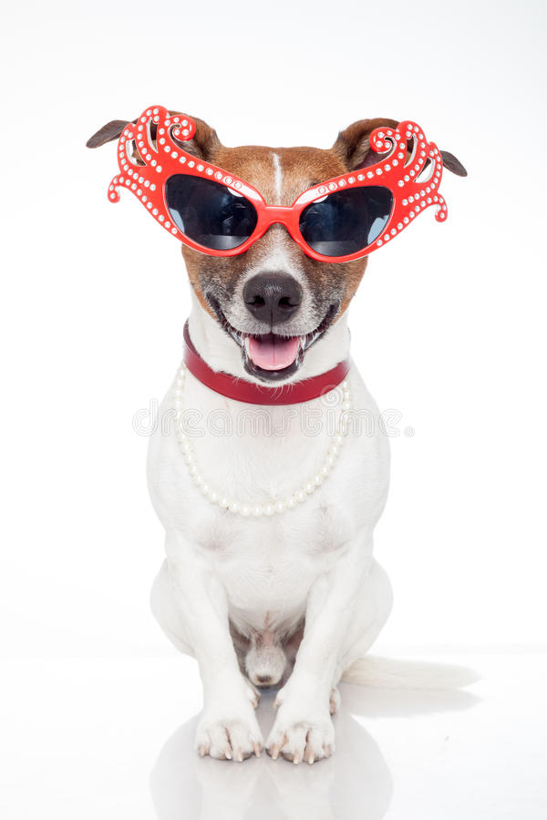 Download Dog as drag queen stock image. Image of canine, glasses - 25092883