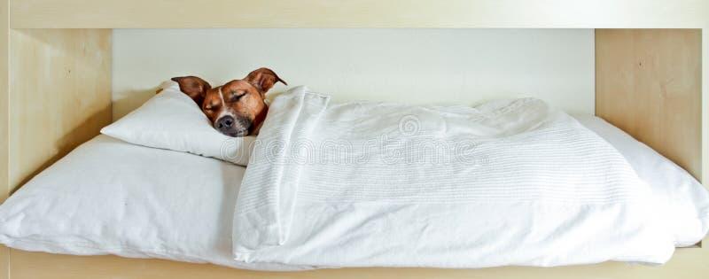 Dog asleep stock photos