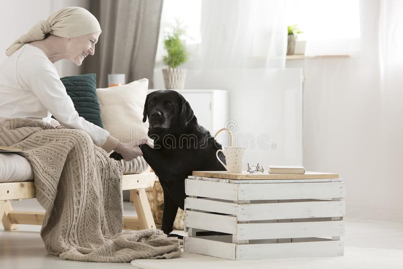 Dog assistant giving paw royalty free stock photography