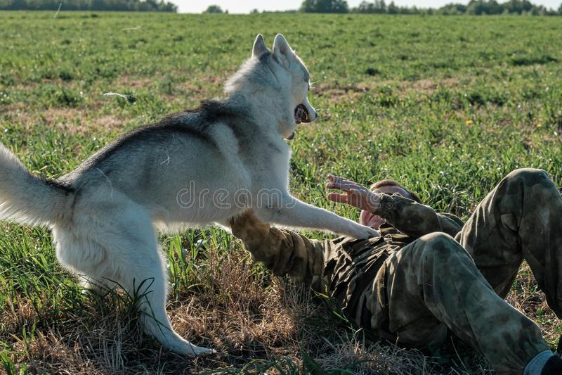 The dog attacked the fallen man, the man fights with his hands stock image