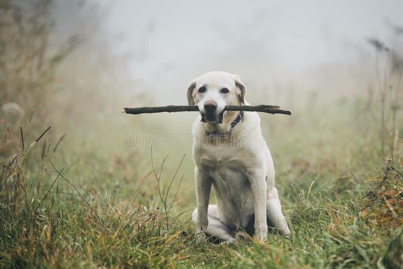 Dog in autumn fog stock image