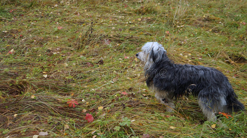 Dog in the autumn forest royalty free stock photo