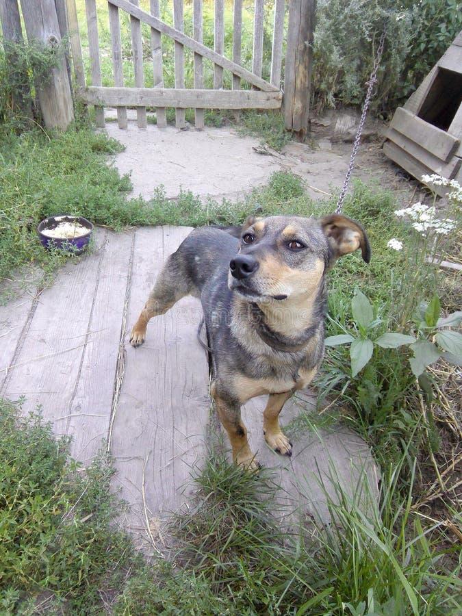 Dog royalty free stock photos
