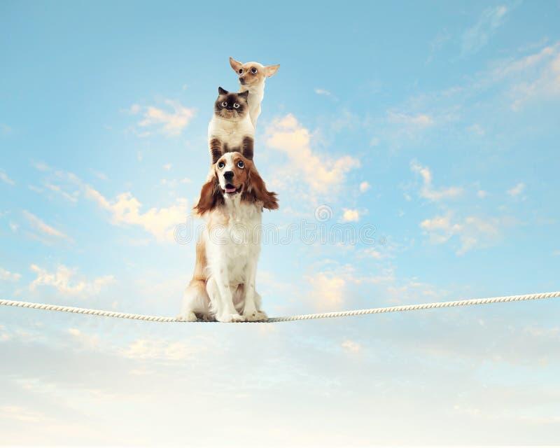 Dog balancing on rope royalty free stock images