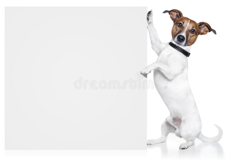 Dog banner. A dog holding / showing an empty banner