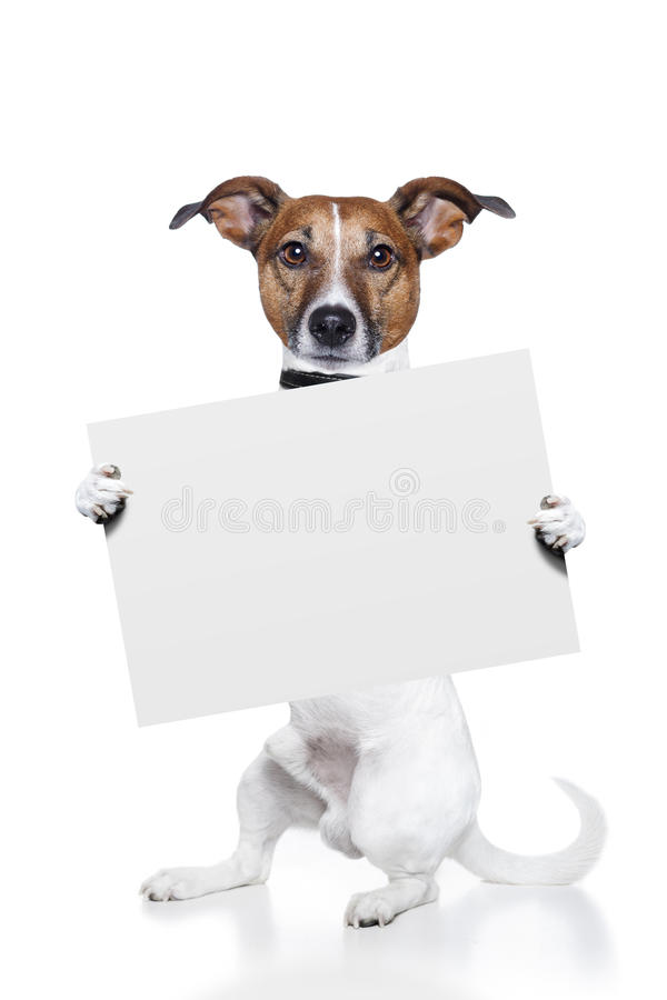 Dog banner stock images