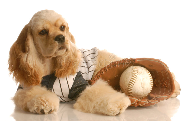 Dog with baseball and glove stock images