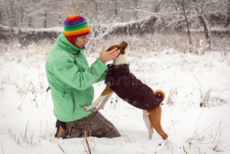 Dog basenji in the snow royalty free stock photo