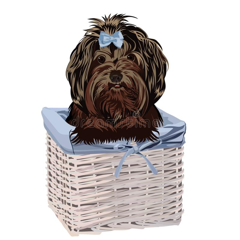 Dog in a basket. Vector illustration. stock images