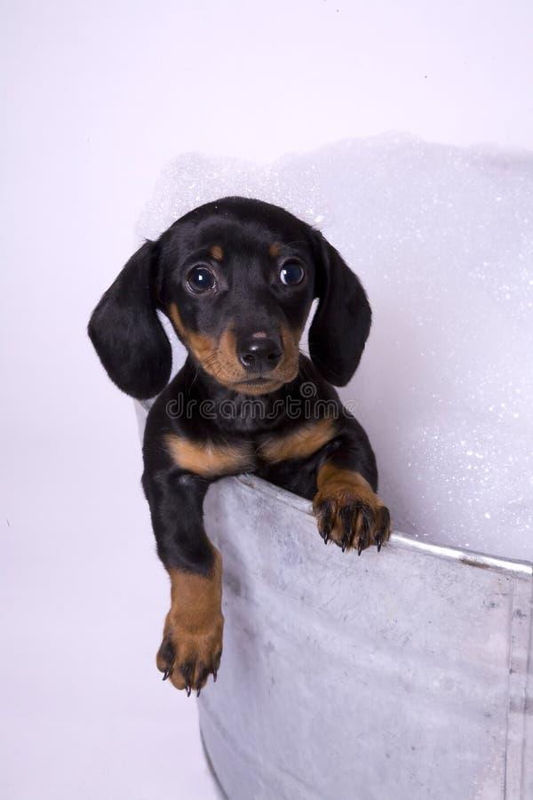 Dog in a bath 2
