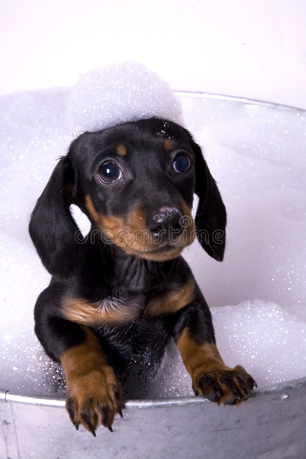 Dog in a bath 5. Dog in a metal tub with tons of bubbles