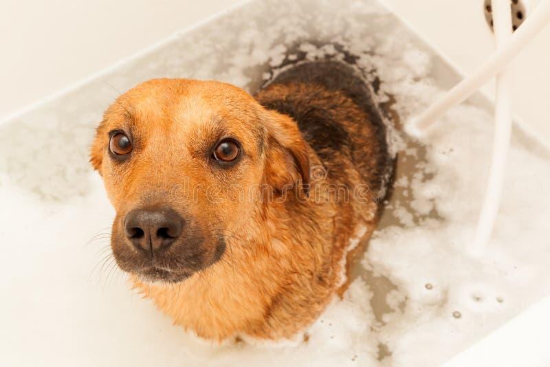 Dog bathing. Shot of cute Dog taking a bath royalty free stock image