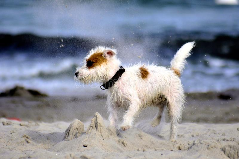 Dog At The Beach Stock Images