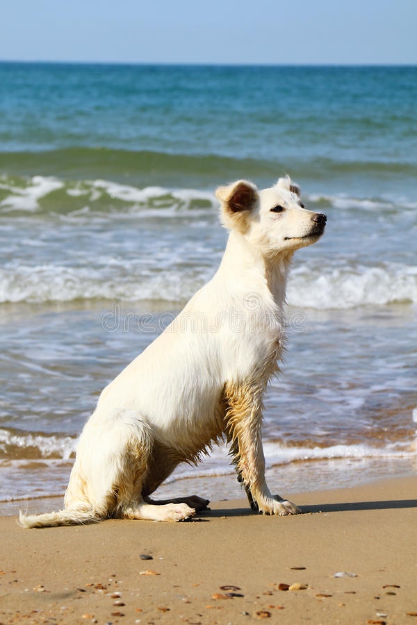 Download Dog on the beach stock image. Image of pedigreeless, adorable - 24471761