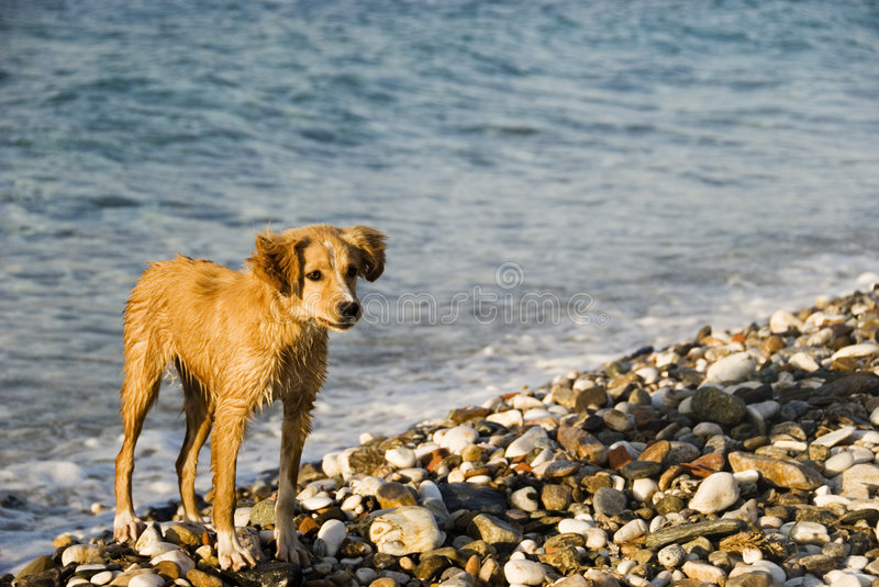 Dog on a beach royalty free stock photo