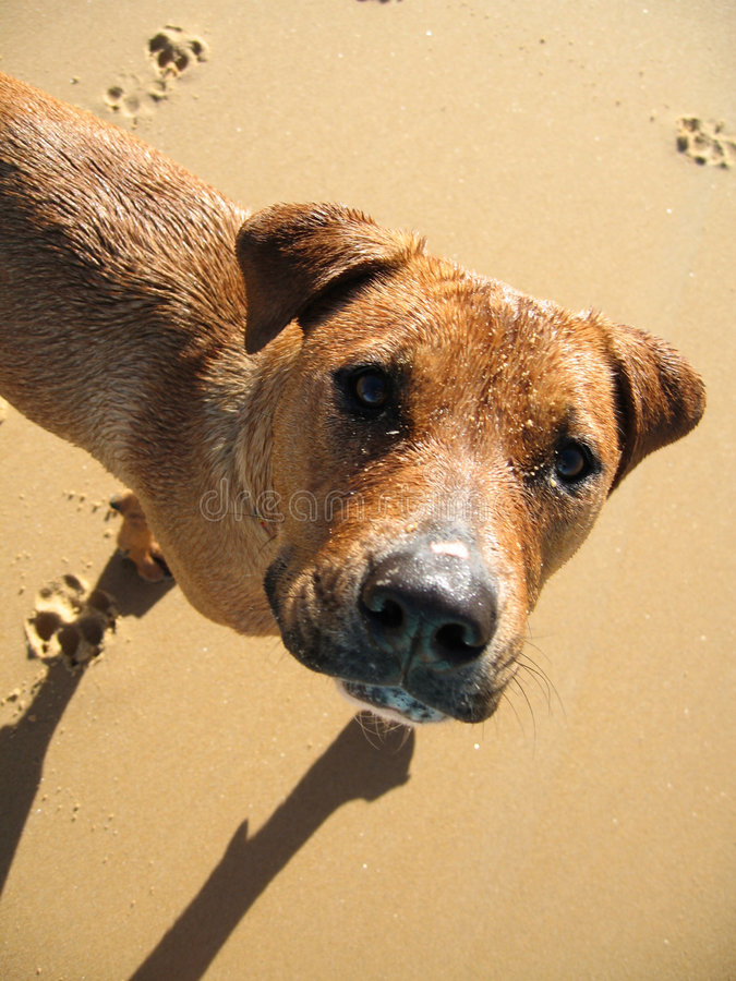 Download Dog on the beach stock image. Image of pawprints, sand - 5037685