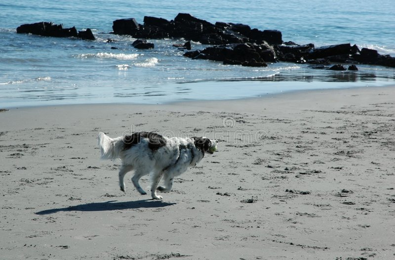 Download Dog on the beach III stock image. Image of surf, beach - 1320369