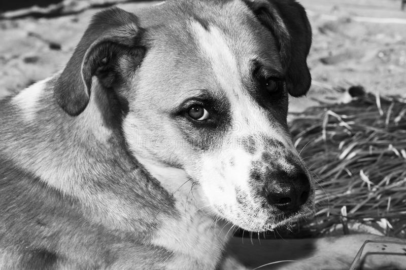 Dog on the beach, the owner abandoned. Dog on the beach with sad look abandoned host royalty free stock photos