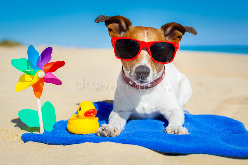 Dog at beach. Dog plays with sunglasses at the beach on summer vacation holidays