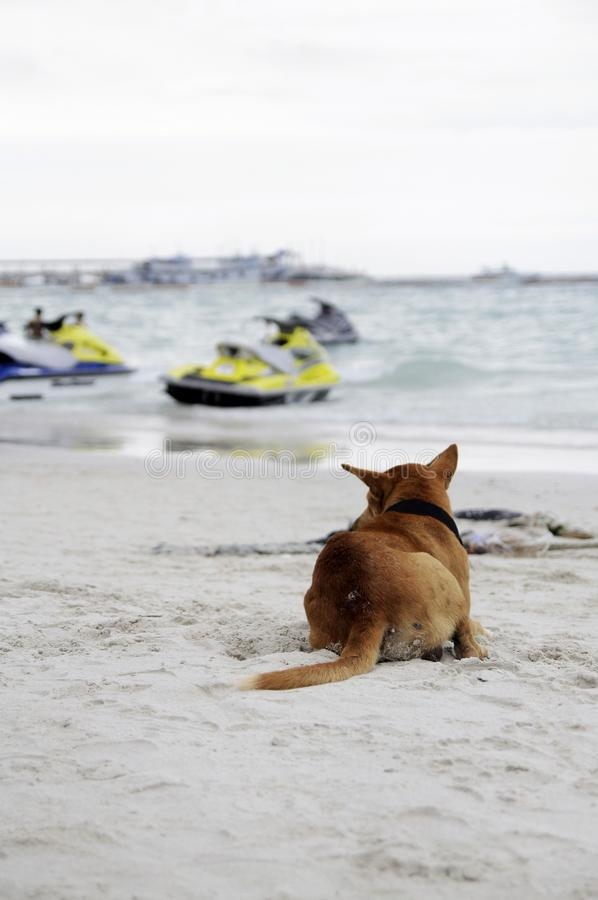 The dog is on the beach. stock photo