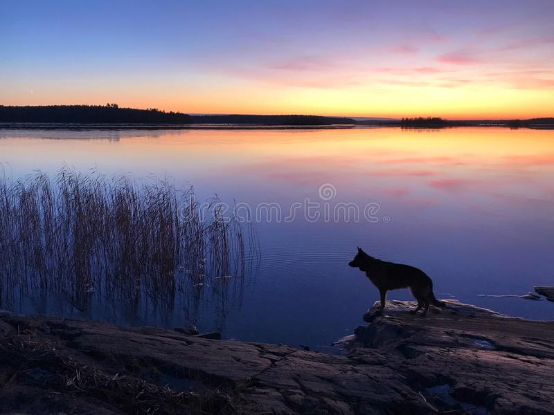 The dog on the beach at sunset stock photos