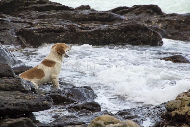 Dog on the beach royalty free stock photo