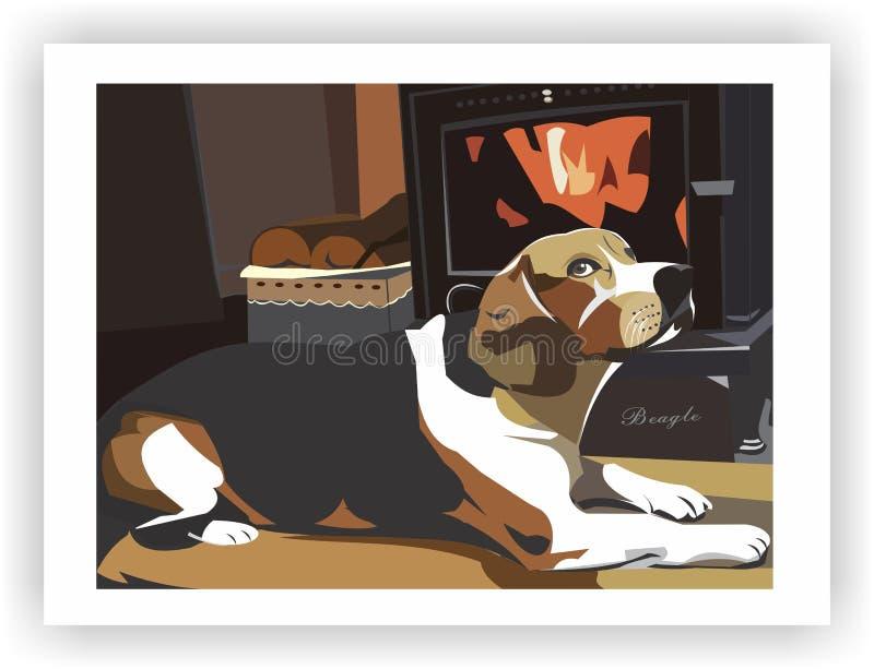 Dog Beagle in warm home stock photos