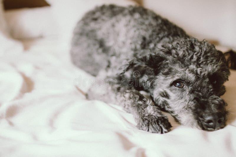 Dog On Bed Free Public Domain Cc0 Image