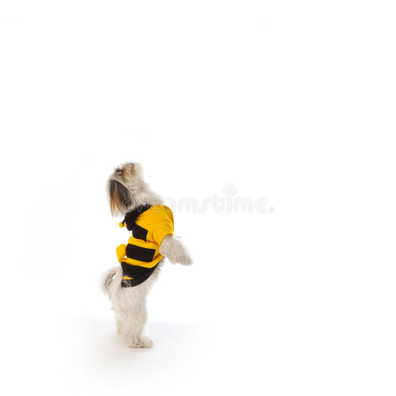 Download Dog bee stock photo. Image of photography, costume, lighting - 18016900