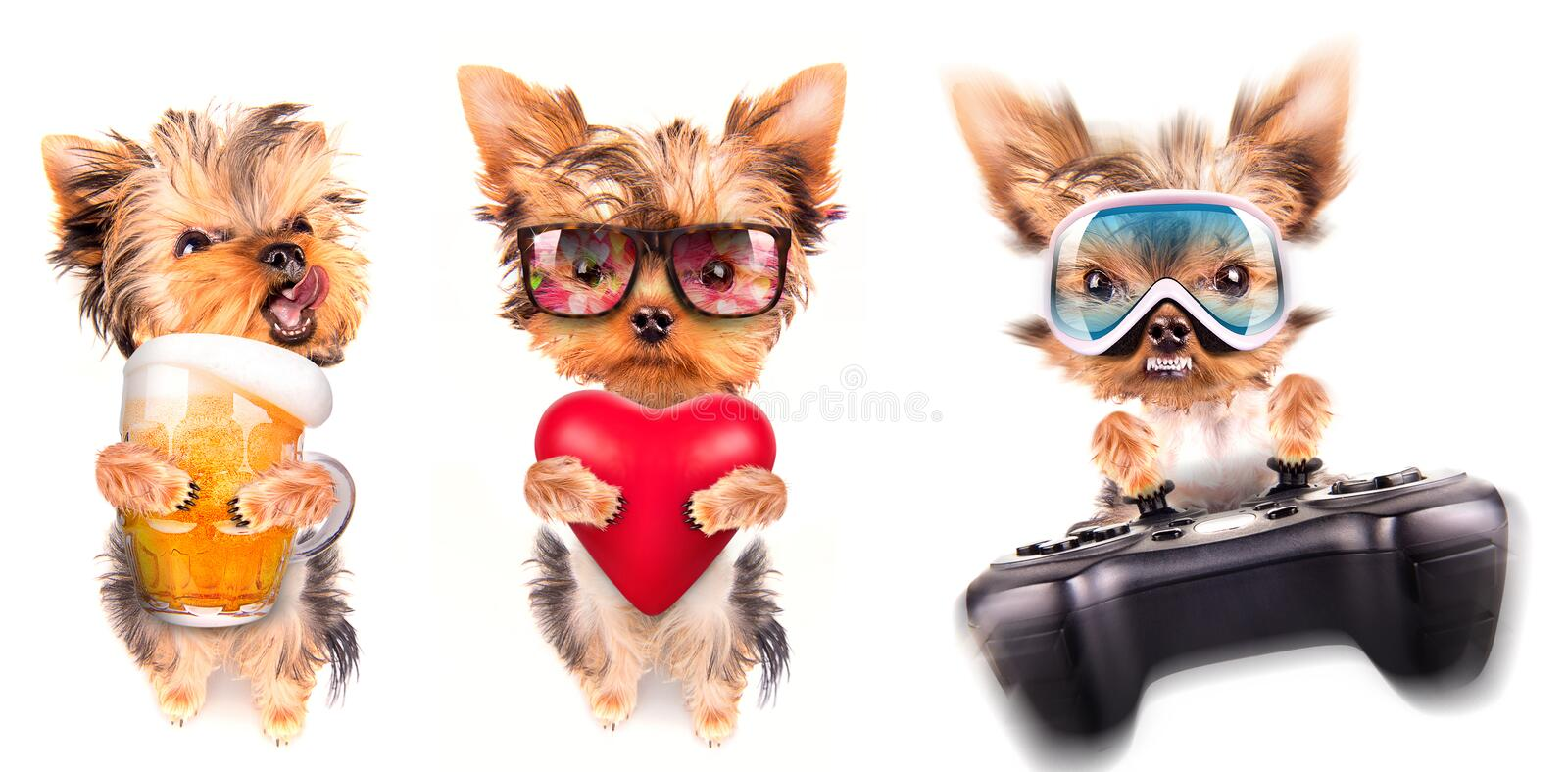 Dog with beer, game pad and lover. Valentine royalty free stock image