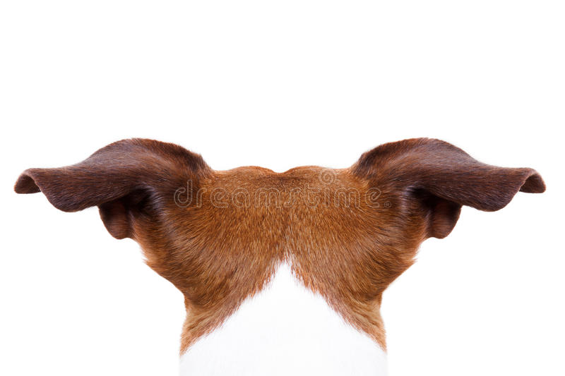 Dog from behind back stock images