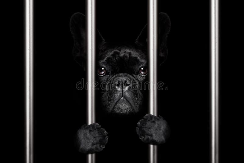Dog behind bars in jail prison stock image