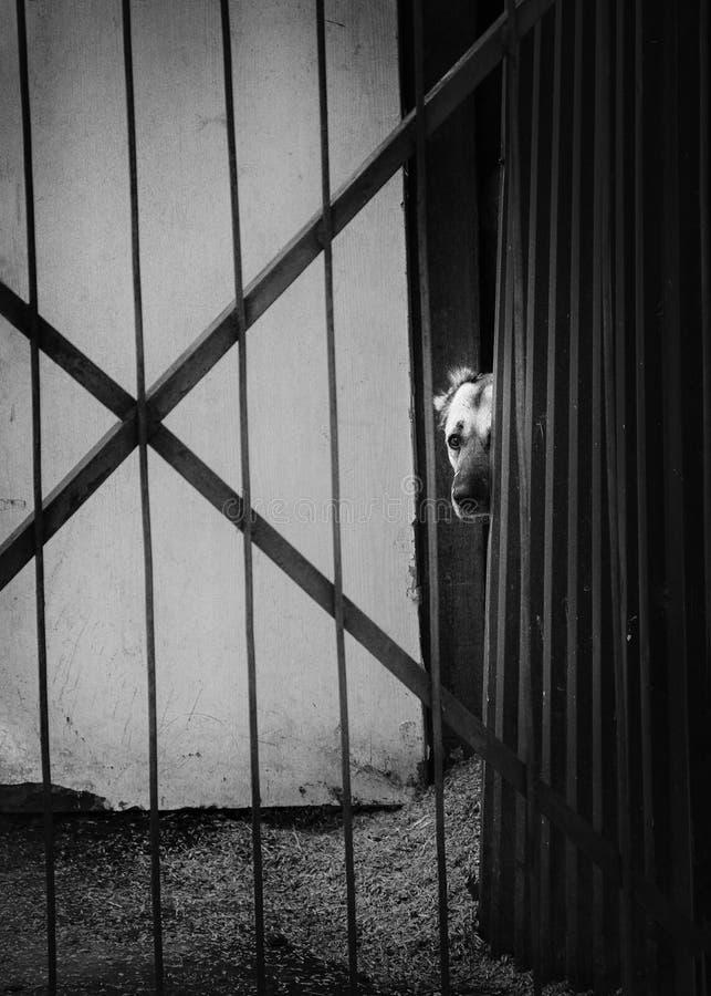 Dog behind bars, looking eyes royalty free stock photo