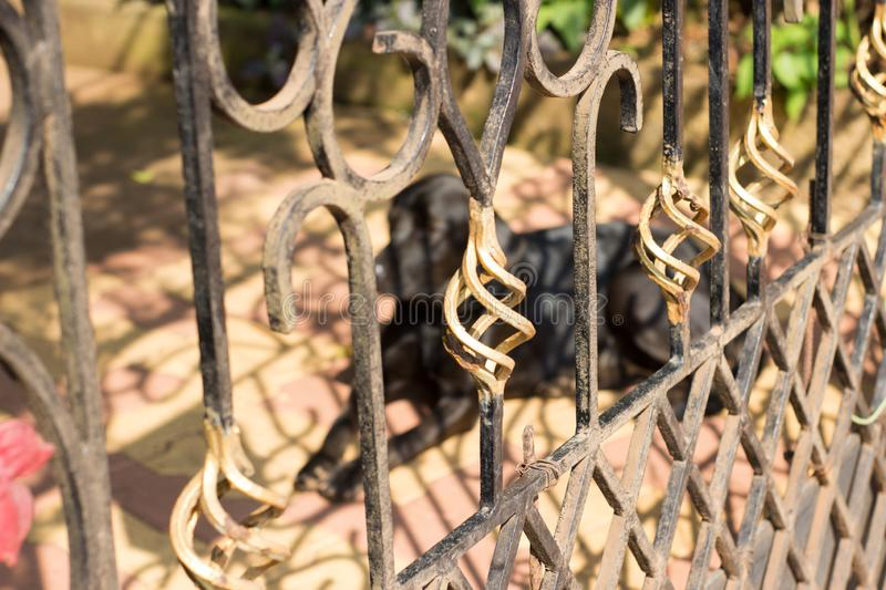 Dog is behind the beautiful fence as a guard. stock images