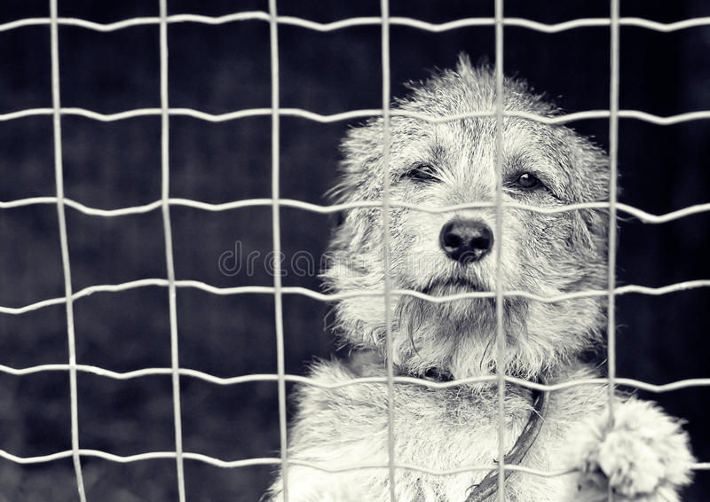 Download Dog behind a fence stock image. Image of kennel, hound - 24230273