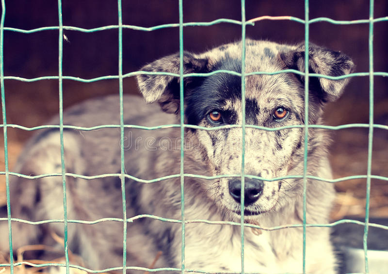 Dog behind a fence royalty free stock image