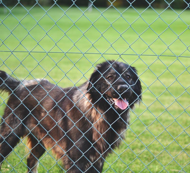 Dog behind fence in cage - Abandoned and unwanted animals concept royalty free stock photography