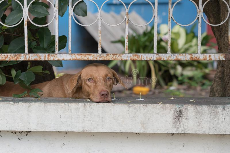 The dog behind fence waiting for owner. stock photo