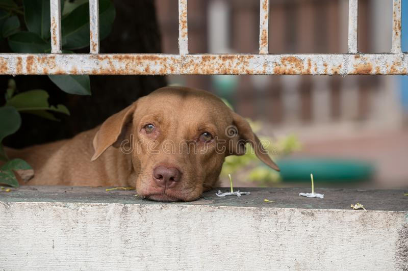 The dog behind fence waiting for owner. royalty free stock images