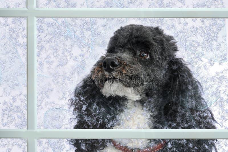 Dog behind a window stock photos