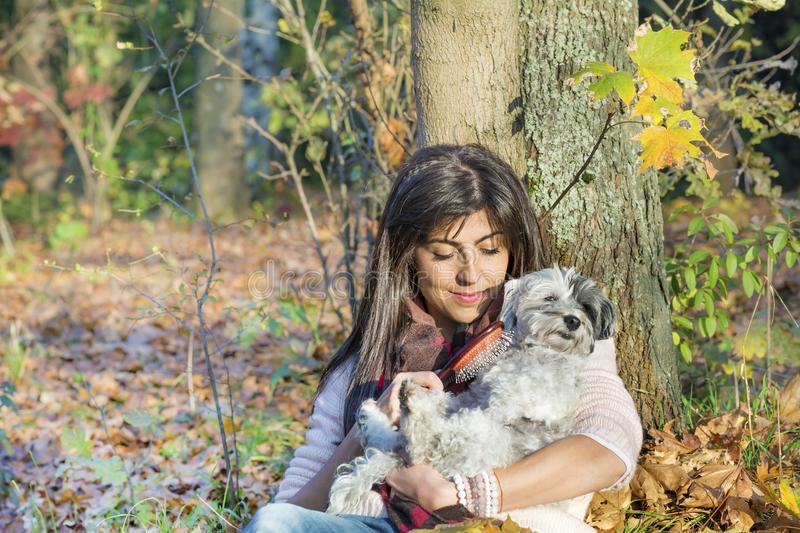 Dog being groomed with hair brush by young woman in the park. Woman sitting in a park and grooming a dog purebreed maltese royalty free stock photography
