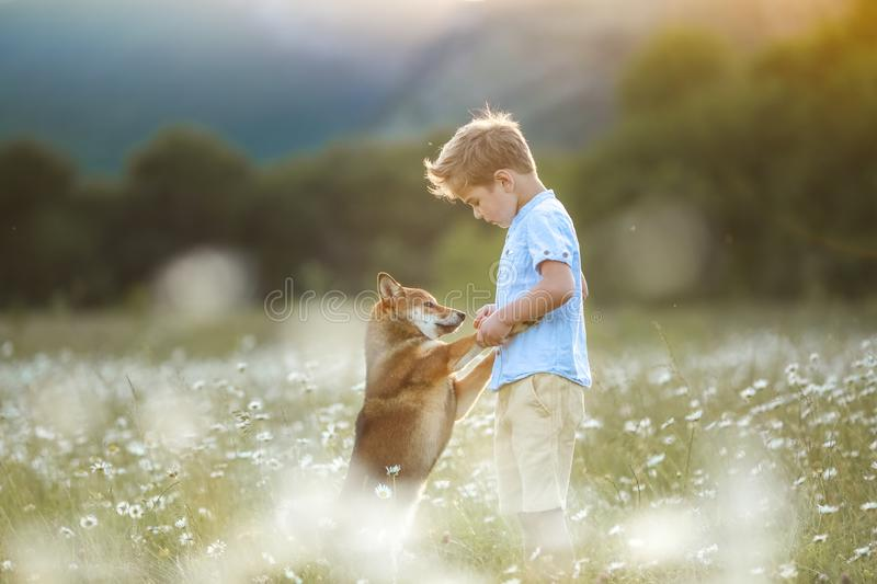 A dog is the best friend for a child . Animal with human outdoors stock images