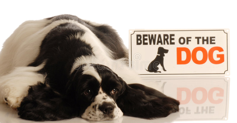 Download Dog With Beware Of Dog Sign Stock Image - Image: 7296275