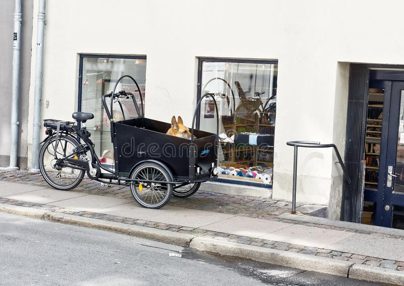 Dog in a bicycle basket waiting for owner. royalty free stock photos