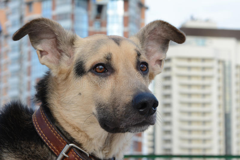 Dog in the big city stock images
