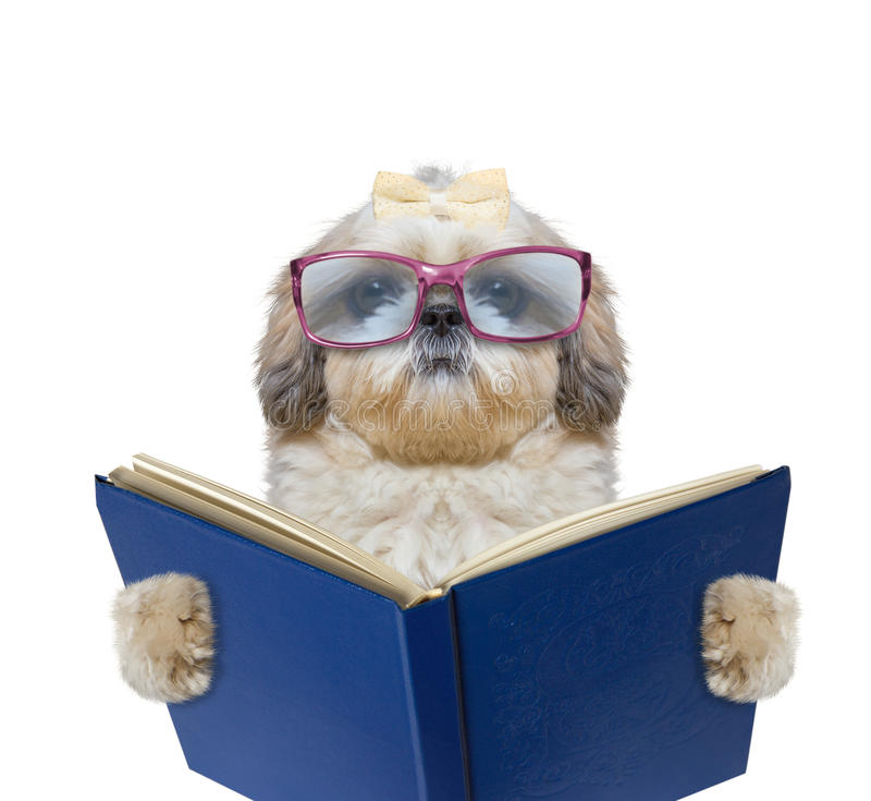 Dog with big funny glasses is reading a book stock photography