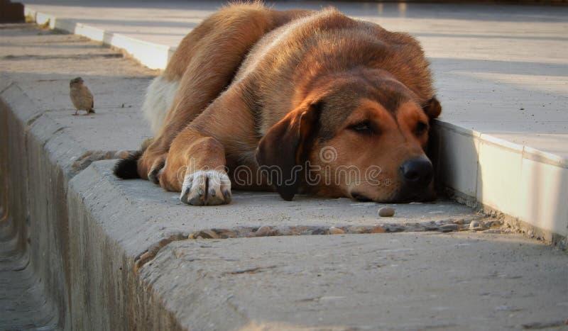 Dog birds sadness stock photo