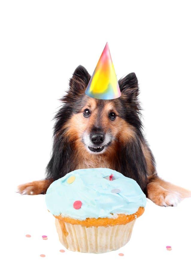 Dog birthday stock photos