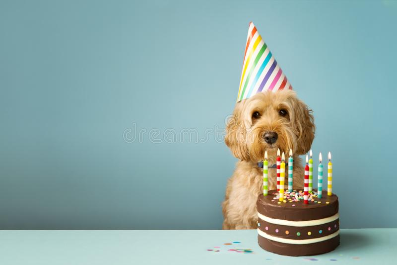 Dog with birthday cake. Cute dog with party hat and birthday cake stock images