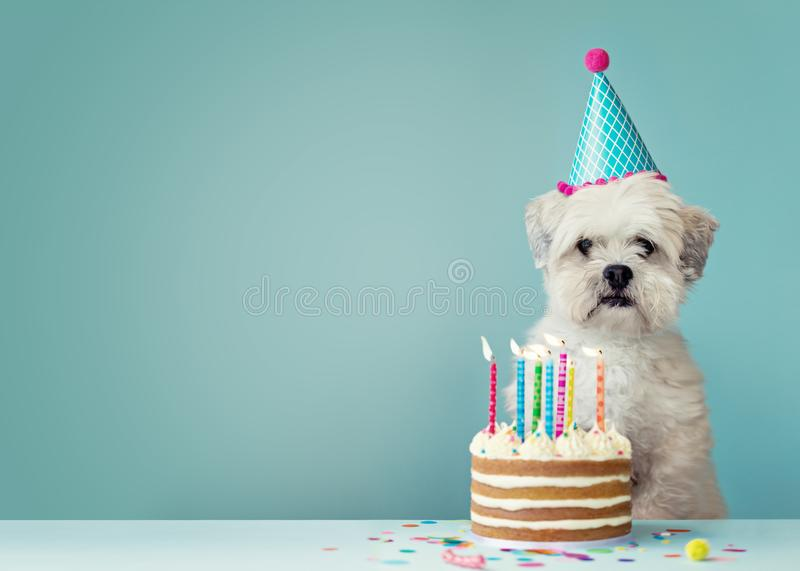 Dog with birthday cake. Cute dog with party hat and birthday cake